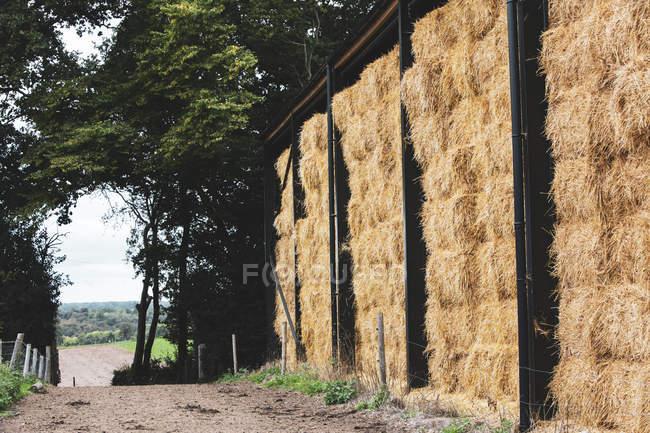 Hohe Strohballen-Stapel an ländlichem Wirtschaftsweg. — Stockfoto