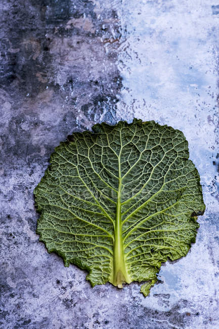 Still life of single cabbage leaf with patterned stem and crinkled green edges on textured background — Foto stock