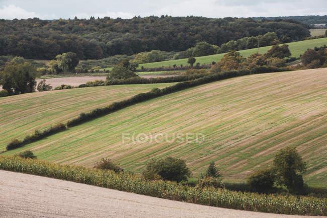 Landschaft mit Feld, Hecken und Wald in der Landschaft in Buckinghamshire, England, Vereinigtes Königreich. — Stockfoto