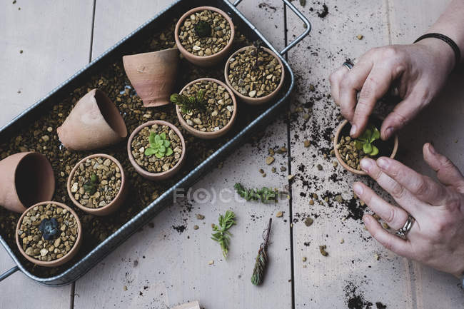 Top view of person planting succulents in gravel in terracotta pots. — Stock Photo