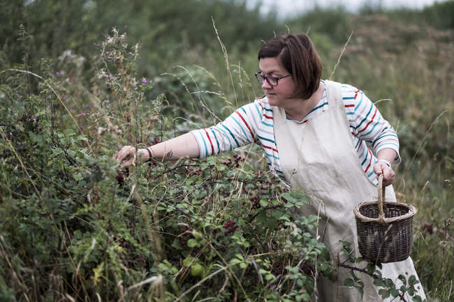 Woman in apron holding brown wicker basket and picking blackberries. — Stock Photo