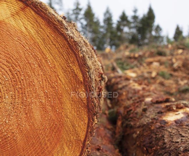 Пиломатеріали необрізні рубані з деревиною. — стокове фото