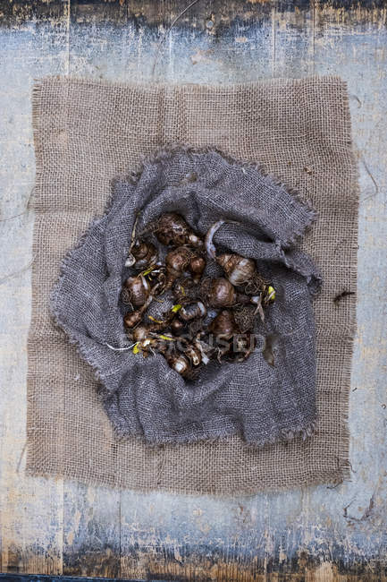 High angle view of brown onion bulbs on grey background. — Stock Photo