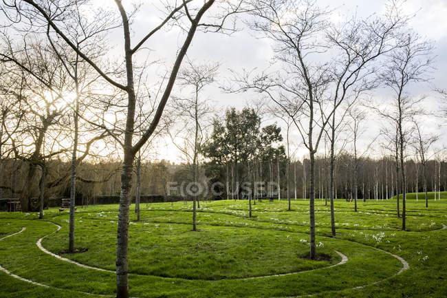 Giardino verde in primavera con giovani alberi in erba con sentieri tagliati attraverso il terreno in Amersham, Buckinghamshire, Inghilterra — Foto stock