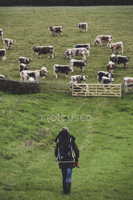 Vista de gran angular del hombre que lleva a un niño y camina hacia el pasto con manada de vacas inglesas Longhorn. - foto de stock