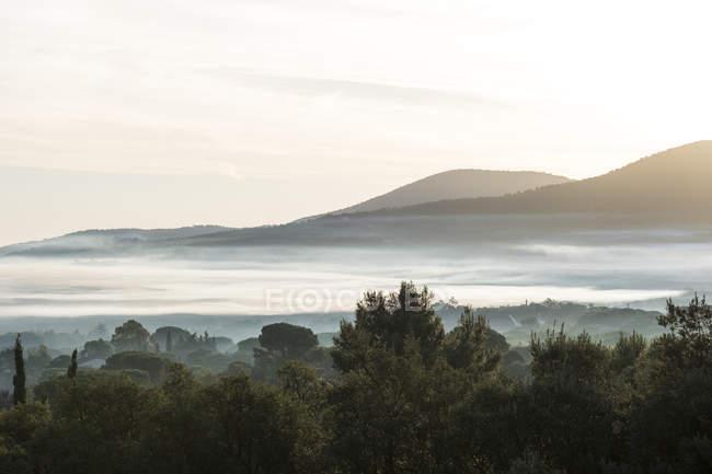 Paysage brumeux avec des arbres et des collines dans la distance. — Photo de stock