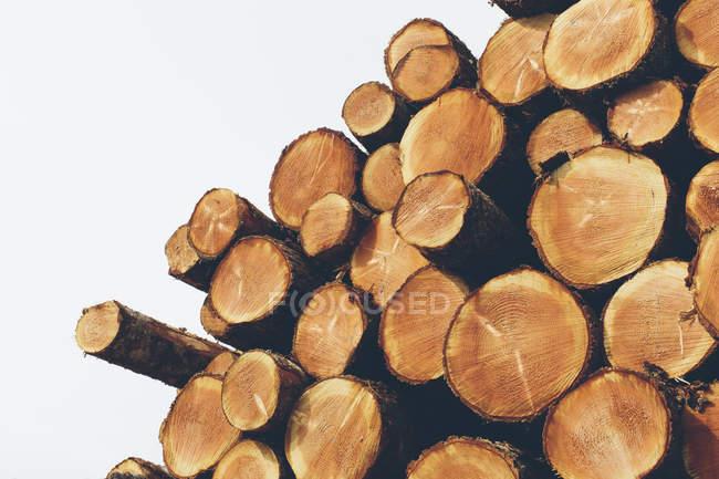 Свежесрезанные ели, болиголовы и ели бревна, уложенные в лесу — стоковое фото