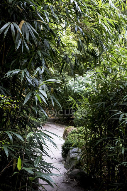 Garden path through tall bamboo plants and foliage in Oxfordshire, England — Stock Photo
