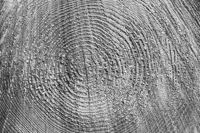 Sawn surface of timber log cut wood with wood grain pattern. — Stock Photo