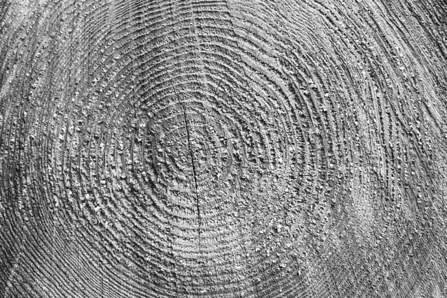 Пиляна поверхня лісозаготівлі зрузають з деревини з візерунком. — стокове фото