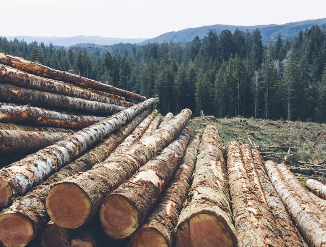Bûches empilées d'épinettes et de sapins fraîchement coupés dans la forêt du Pacifique Nord-Ouest, Washington, États-Unis — Photo de stock