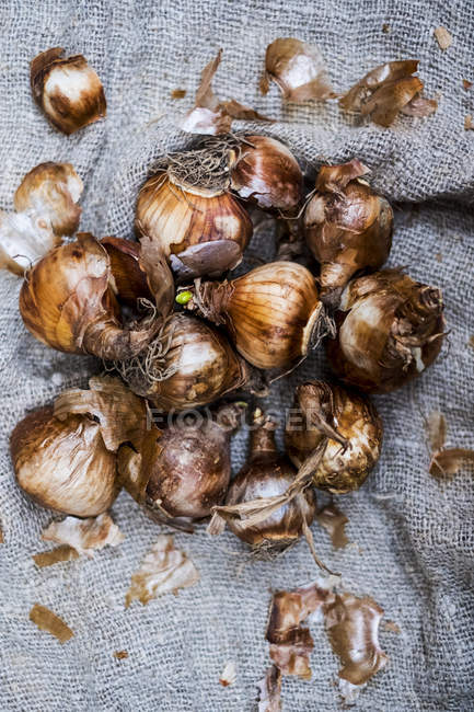 Close-up of brown onion bulbs on grey background. — Stock Photo