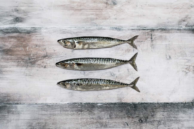 Top view of fresh mackerel fish on rustic grey background. — Stock Photo