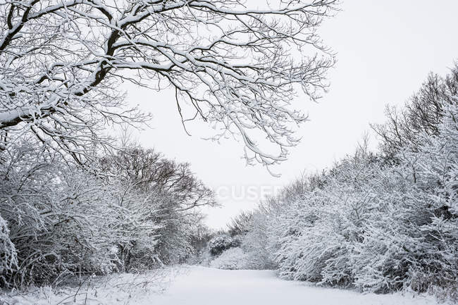 Winter scenery along rural road lined with snow-covered trees. — Fotografia de Stock