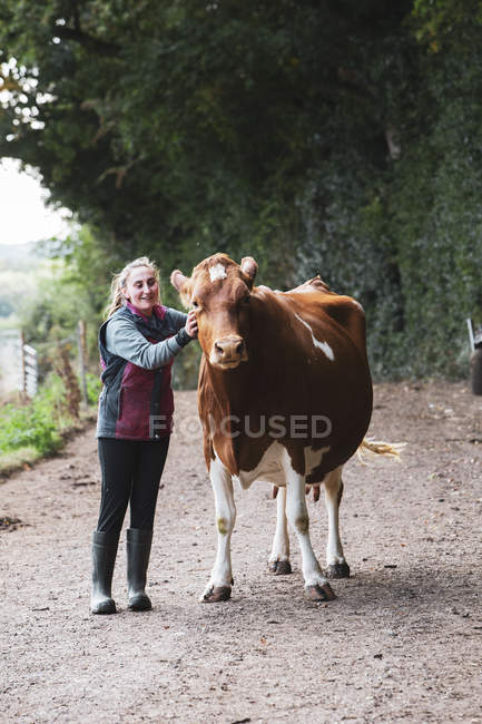 Young woman with Guernsey cow standing on rural road. - foto de stock
