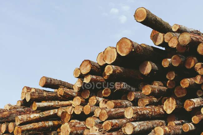Grumes empilés d'épicéas, de pruches et de sapins fraîchement abattus — Photo de stock