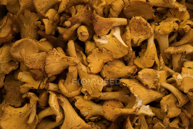 Close-up of fresh Chanterelle mushrooms at food market stall. — Stock Photo