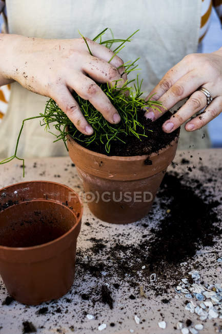 Close-up of person planting succulent in potting soil in terracotta pot. — Stock Photo