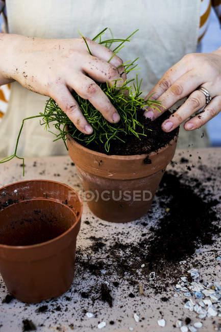 Gros plan de la personne qui plante des plantes succulentes dans un terreau en terre cuite . — Photo de stock