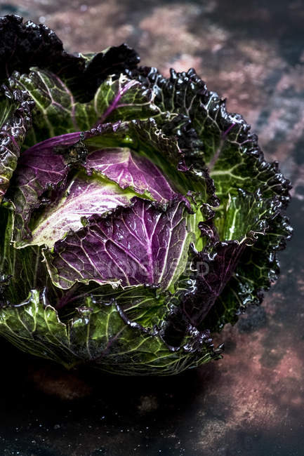 Still life of fresh round green savoy cabbage with purple and red leaves. — Foto stock