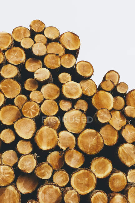 Freshly cut spruces, hemlocks and firs logs stacked in forest — Stock Photo