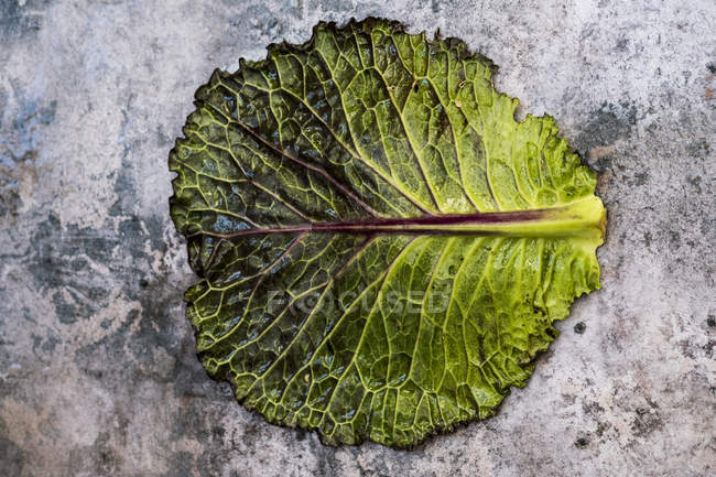 Still life of single fresh cabbage leaf with red and green colors on grey background. — Foto stock