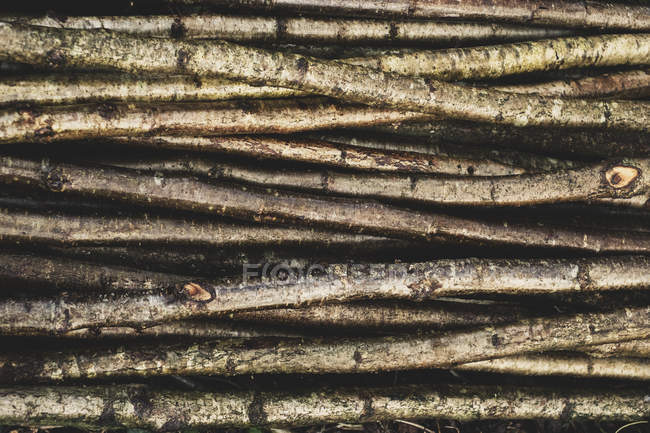 Close-up of bunch of wooden stakes used in traditional hedge building. — Stock Photo