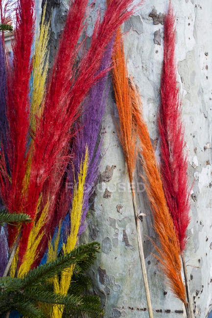 Close-up of colorful dyed wispy branches against grey wall. — Photo de stock