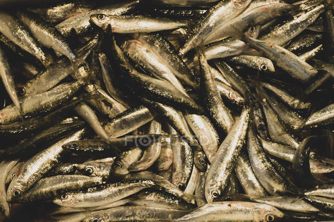 High angle close-up of fresh sardines at fish market stall. — Stock Photo