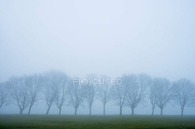 Misty landscape with grass and group of trees. — Stock Photo
