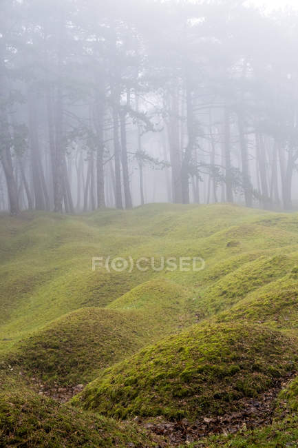 Misty woodland with grass mounds and trees in the background. — стоковое фото