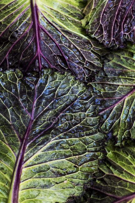 Natura morta di foglie di cavolo verde e rosse fresche . — Foto stock
