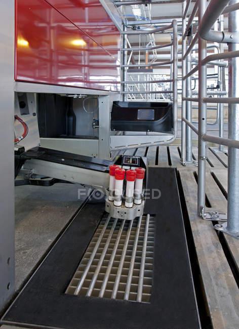 Macchina automatica per la mungitura in allevamento bovino Jarva, Estonia — Foto stock