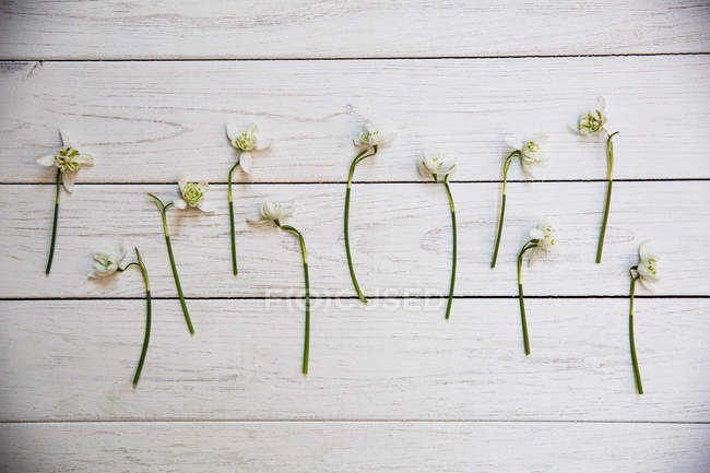 High angle view of bunch of snowdrops on white wooden table. — Stock Photo