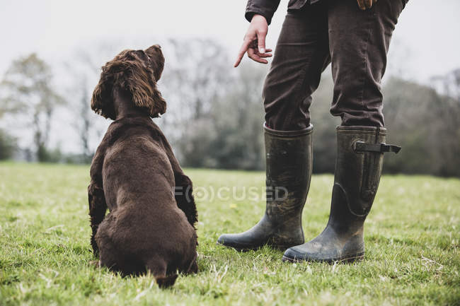 Dog trainer standing outdoors and giving hand command to brown Spaniel dog. — стокове фото