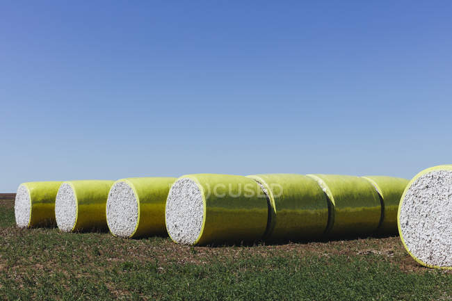 Harvested cotton bales wrapped in yellow plastic vinyl in Great Plains, Kansas, USA — Stock Photo