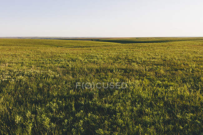 View across Tallgrass Prairie Preserve in spring with lush grass in Great Plains, Kansas, USA. — Fotografia de Stock