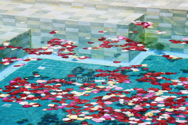 Piscina con petali di rosa, primo piano — Foto stock
