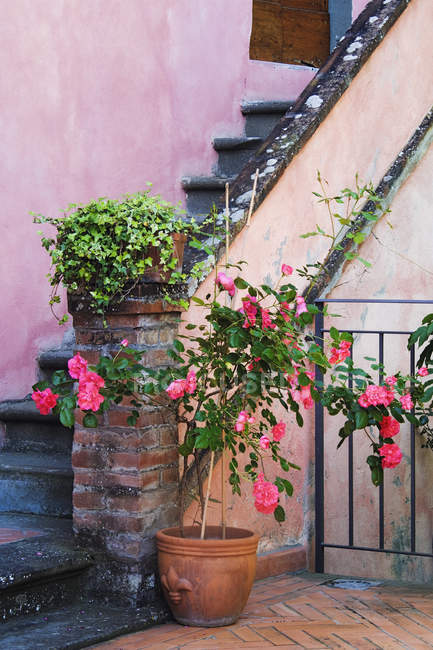 Potted plants at base of building stairs — Stock Photo