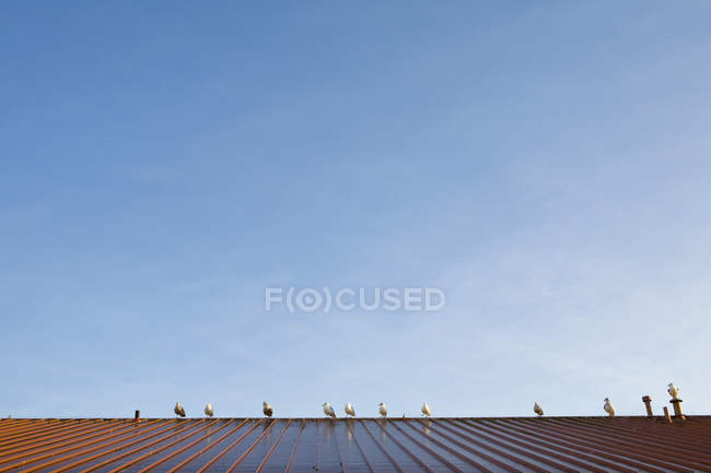Birds perched on metal roof against blue sky — Stock Photo