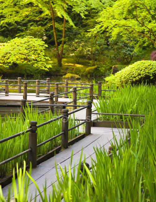 Прогулка в японском саду возле пруда в зеленой растительности — стоковое фото