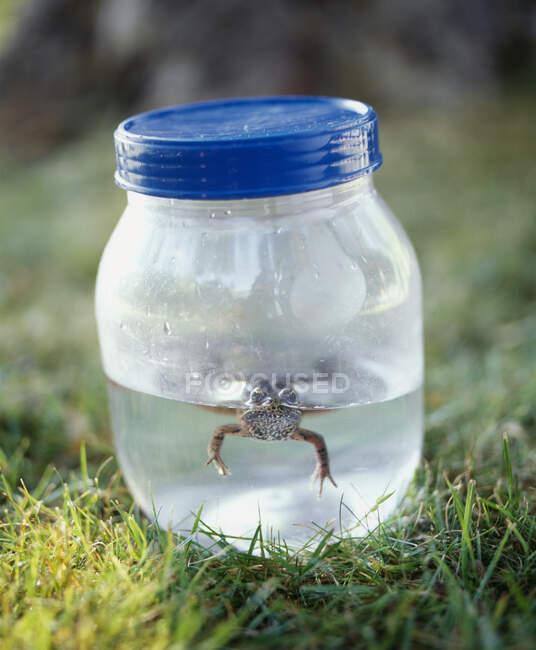 Rana in un vaso di erba verde, vista da vicino — Foto stock