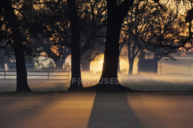 Trees in morning mist in backlit in countryside — Stock Photo