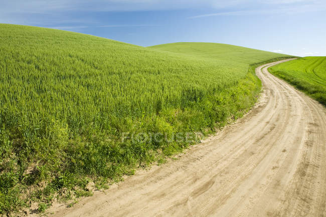 Strada sterrata attraverso il campo di grano, Palouse, Washington, USA — Foto stock