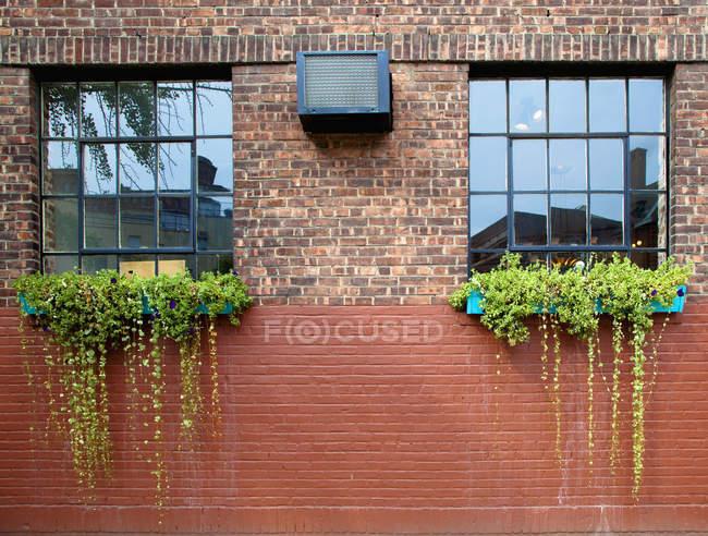 Квіткові ящики на цегляну стіну з вікнами, Нью-Йорк, Нью-Йорк, США — стокове фото