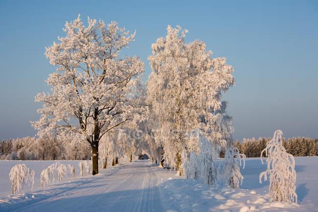 A neve cobriu a estrada e as árvores no campo de Estónia — Fotografia de Stock