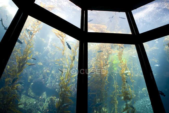 Aquarium de la baie de Monterey avec poissons nageurs, Monterey, Californie, USA — Photo de stock