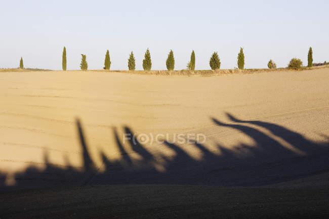 Cyprès sur la colline en Toscane, Italie — Photo de stock