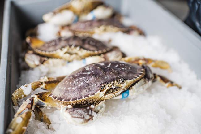 Groupe de crabes frais capturés crustacés sur la glace au marché aux poissons . — Photo de stock