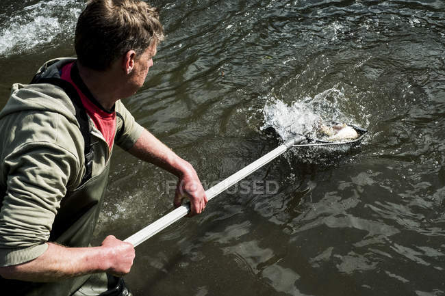 Vista ad alto angolo dell'uomo in piedi nel fiume, con rete da pesca con trote . — Foto stock